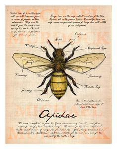 Bee Field Journal illustration 11x14.