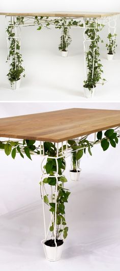 6 Ways To Include Indoor Vines In Your Interior | Keep your home office functional but brimming with plant life by including one of these desks that feature legs that encourage your plants to grow tall without taking up too much space.