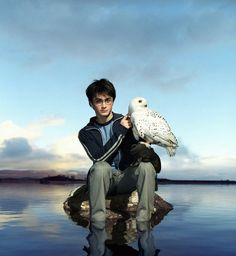 Harry Potter 30-day challenge || Day 7 - Favorite minor character (no repeats) ||   Hedwig! <3 Her death made me cry... Always loved her silent sass against Harry & everyone else! xD RIP Hedwig