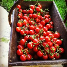 Hope Gardens Guide to the Best Heirloom Tomatoes of 2016 www.yourhopegarden.com