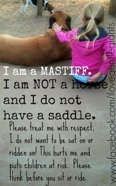 """For anyone who missed the """"Mastiff Commercial"""" on the Superbowl on Sunday here's a replay. A kid makes a rude and disobedient comment to . St Bernard Dogs, English Mastiff, Doritos, Gentle Giant, Stupid People, Super Bowl, Fur Babies, Dog Breeds, It Hurts"""