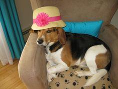 Sun tan?..I need my hat! My dog Bailey.