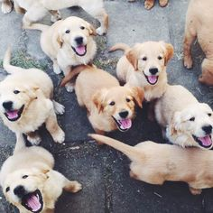 So many happy puppies! We can't get enough of pups that are this sweet and happy!