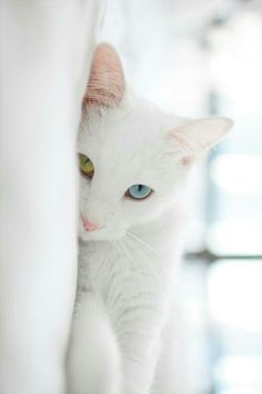 I love the kitten' s eyes