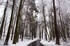 O inverno na terra dosvikings