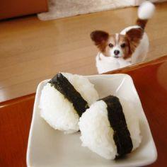 #おにぎり #おむすび #米大好き #北海道米 #ゆめぴりか #海苔 #昼食 #ランチ #食べ物 #日本 #熱い視線 #犬 #わんこ #愛犬 #犬大好き #写真好き #カメラ男子 #カメラ女子 #🐶 #🍙 #lunch #japan #nippon #instadog #lovedog #dogstagram #pet #memory