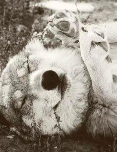 I Am a Free Wolf Photo
