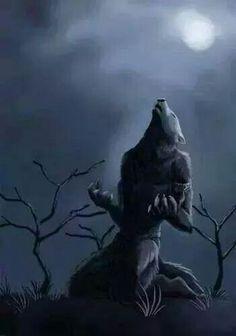 gif loup garou · The darkness purple Weird Creatures, Fantasy Creatures, Mythical Creatures, Werewolf Hunter, Werewolf Art, Furry Art, Apocalypse, Of Wolf And Man, Wolf Love