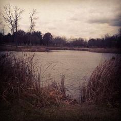 #pond #Illinois  #winter