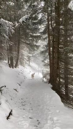 Beautiful Nature Scenes, Amazing Nature, Beautiful Landscapes, Winter Pictures, Nature Pictures, Christmas Scenery, Snow Scenes, Beautiful Places To Travel, Winter Beauty
