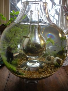 "The ""Island Vessel Vivarium"" is a terrarium inside an aquarium. Design by Alberto J. Almarza."
