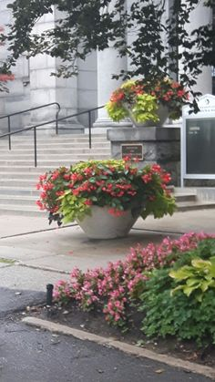 Mount Pleasant, Types Of Plants, Cemetery, Container Gardening, Container Garden
