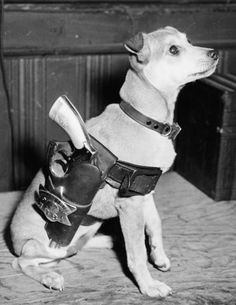 Captain Louis Capparelli of Maxwell Street Police Station's dog Lassie. Chicago 1944