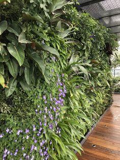 https://flic.kr/p/ToXiML | Melb Street Erik van Zuilekom design2 | Vertical garden design by Erik van Zuilekom. Located on 21st floor of this spectacular apartment block. Planting detail. Photo courtesy of maintenance team.