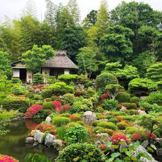 いつかの京都旅行。  夢窓国師の庭園、等持院。  ずーっと眺めていたい美しさ。  #japan  #kyoto  #tojiin  #tojiintemple  #temple  #japanesetemple  #garden  #japanesegarden  #japanesetraditional  #japanesestyle  #musokokushi  #nature  #color  #green  #amazing