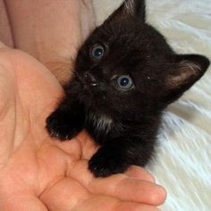 Tiny kitten time! How gorgeous and cute?