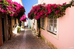 Cascais, Portugal.The streets are very narrow and the houses are colorful,with lots of flowers...so cute !
