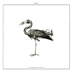 The Openbill This species of stork is one of the most evolved animals and was discovered by Lord Philip on his 2nd travel. Although it feeds...