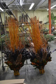 straight-and-curly-copper-willow.jpg