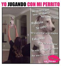 Por esta razón se fue mi novio! Funny Spanish Memes, Spanish Humor, Funny Memes, Hilarious, Crush Movie, Mexican Memes, Catch Feelings, Animal Jokes, New Memes