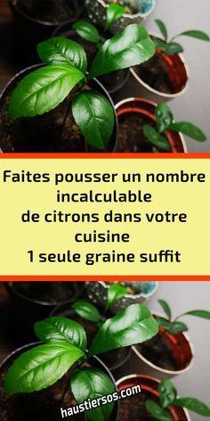 Comment Planter, Permaculture, Kiwi, Flower Power, Vegetables, Bel Art, Green, Claire, Cactus