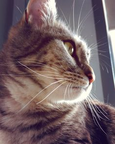 #dreamy #cat #meow #whiskers #vintage #cats #meow