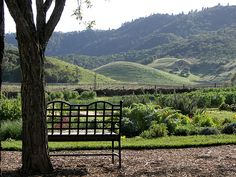 The kitchen garden at French Laundry, Napa Valley