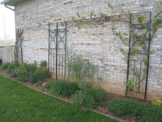 Another way to use an old gazebo frame to make two trellises, one for fruiting vines in an herb garden, the second for a climbing hydrangea container garden in a breezeway.
