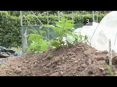 How and When to Earth Up Potatoes - YouTube