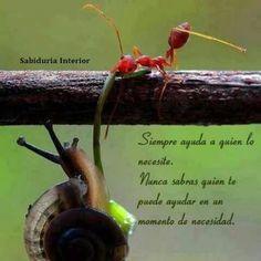 sabiduría interior...ayudar!