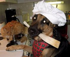 Gonna Make Some Cattatouille In This Picture: Photo of dog cooking cat