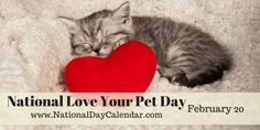IT'S NATIONAL LOVE YOUR PET DAY! Bring your pet a special treat, take an extra long walk or give them a little more attention on National Love Your Pet Day. Whatever you decide to do, spoil and appreciate your pets! Love Your Pet Day, National Day Calendar, Pirate Day, Buddy The Elf, Cute Animal Pictures, Cats And Kittens, Cute Animals, Farm Animals, Kitty
