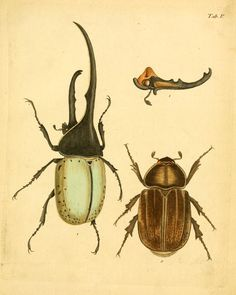plates - Abbildungen zu Karl Illiger's Uebersetzung von Olivier's Entomologie, oder, Naturgeschichte der Insecten : - Biodiversity Heritage Library