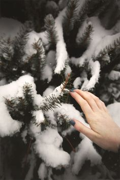 December Do: Go To A Christmas Tree Farm