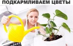 Секрет роскошного комнатного цветника прост: растения нужно хорошо подкармливать, иначе не дождаться ни пышной листвы, ни хорошего цветен