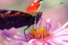 """takiego oto motylka dziś upolowałam :)co prawda nie wydaje się tak piękny z bliska :Dale proszę o wyrozumiałość, bo to moje pierwsze """"makro-próby"""" motyli :Dpozdrowienia!"""