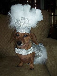 Doxie costume!