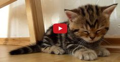 Kittens Falling Asleep Compilation