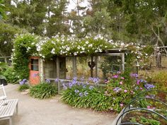 More about A Coop for the Garden « Central Coast Gardening