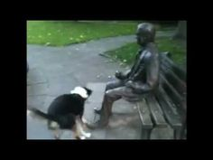 Poor doggie.  LOL!