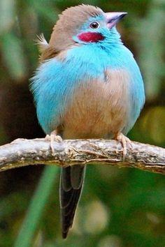 Beautiful Creatures, Animals Beautiful, Cute Animals, Cute Birds, Pretty Birds, Exotic Birds, Colorful Birds, Vogel Gif, Most Beautiful Birds