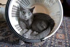 Cat inside a laundry basket