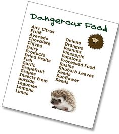 These foods can be poisonous or upset your hedgehog's stomach and you should avoid feeding these foods to hedgehogs. We have another post that list treats you can feed your hedgehog. Hedgehog Food, Hedgehog Care, Pygmy Hedgehog, Hedgehog House, Cute Hedgehog, Hedgehog Treats, Hedgehog Supplies, Hedgehog Habitat, Hedgehogs Pet Care