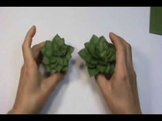 Paper Cactus 선인장