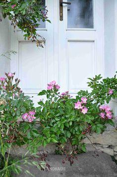 Garden Design, Flowers, Plants, Farmhouse, Landscape Designs, Plant, Royal Icing Flowers, Flower, Florals
