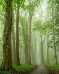 🇳🇱 Misty green forest (Netherlands) by Lars van de Goor 🌳cr. Green Wall Color, Forest Green Color, Dark Green Walls, Soothing Colors, Deep Forest, Landscape Photographers, Greenery, Paths, Dutch