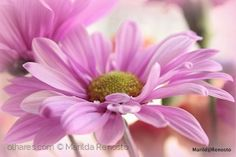 Flor em macro