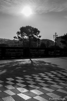 One of the many trees placed on the Place Massena.
