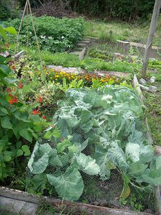 at my allotment