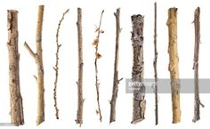 View Stock Photo of Twigs And Sticks Isolated On White. Find premium, high-resolution photos at Getty Images. High Resolution Photos, Bobby Pins, Hair Accessories, Stock Photos, Image, Beauty, Branches, Sticks, Hairpin